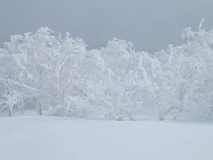 霧氷ルベス1