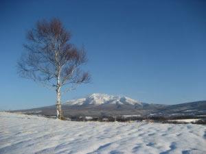 白樺と斜里岳