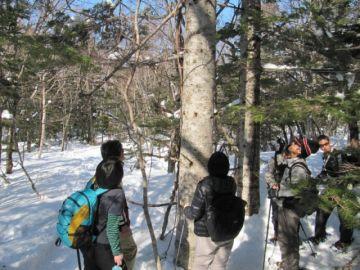 五湖の森もヒグマの痕跡があちこちに・・