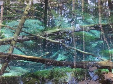冬の神の子池